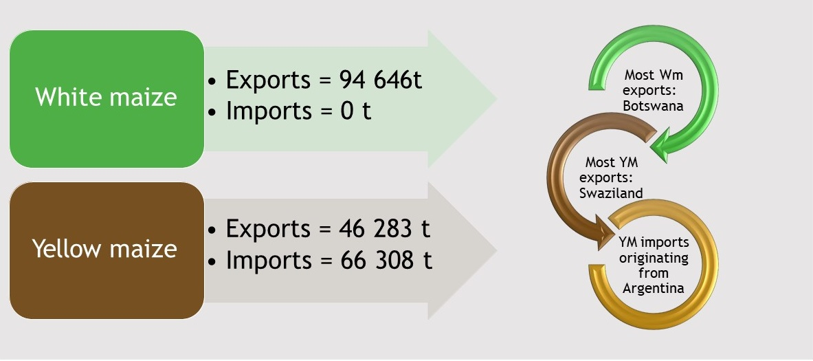 Yellow and White Maize Imports and Exports