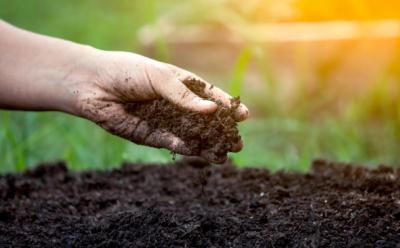 Soil Health by Rand Agri