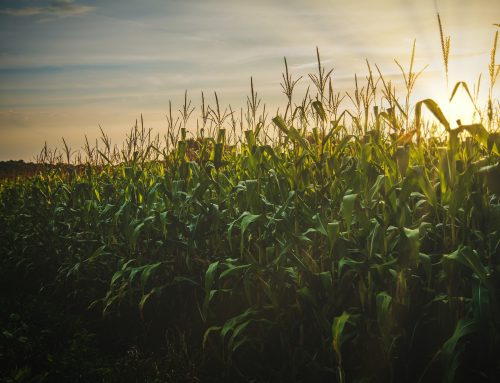 Economic growth and increased grain demand