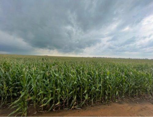 Rand Agri ondersoek landboutoestande