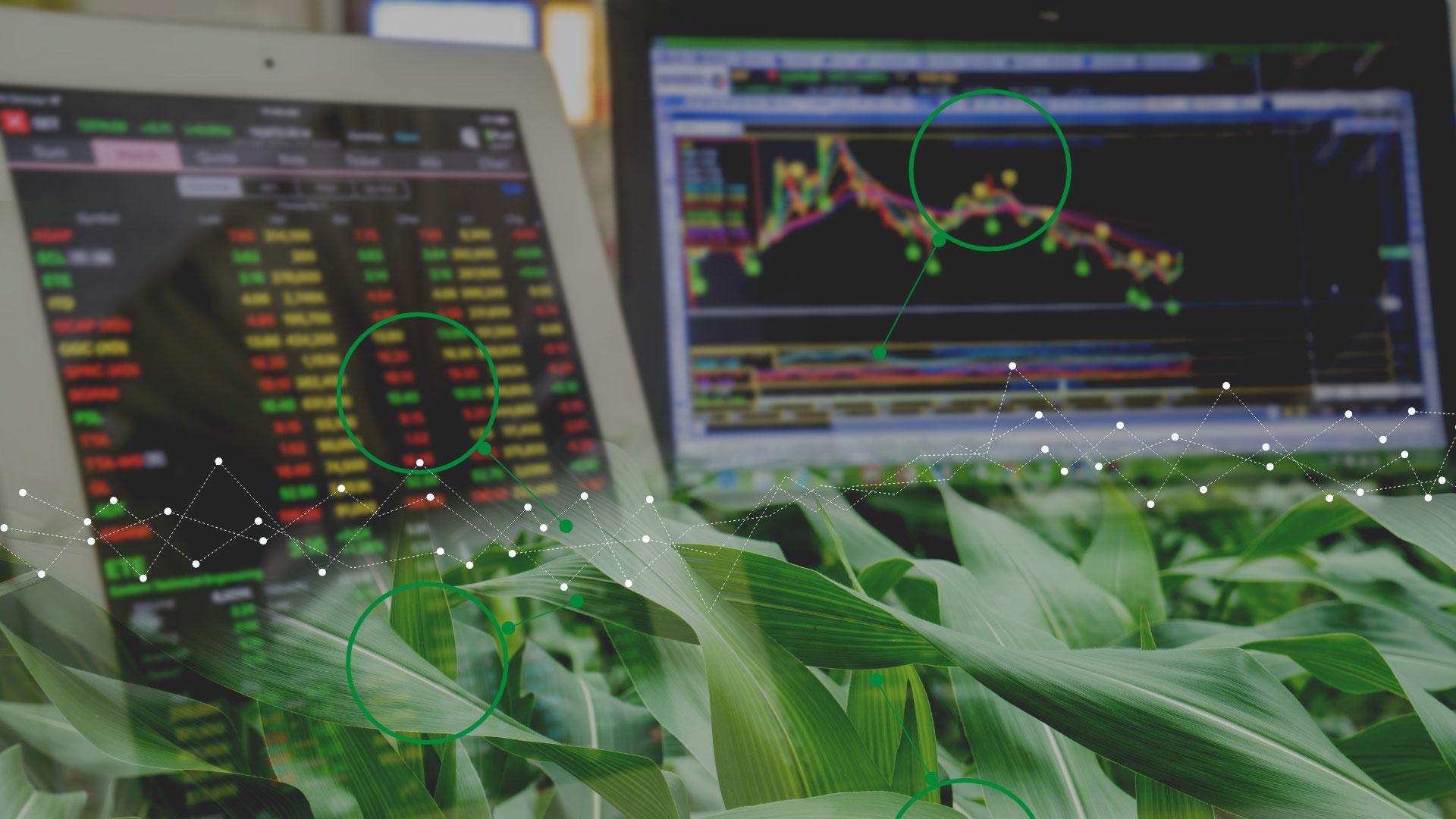 grain trading